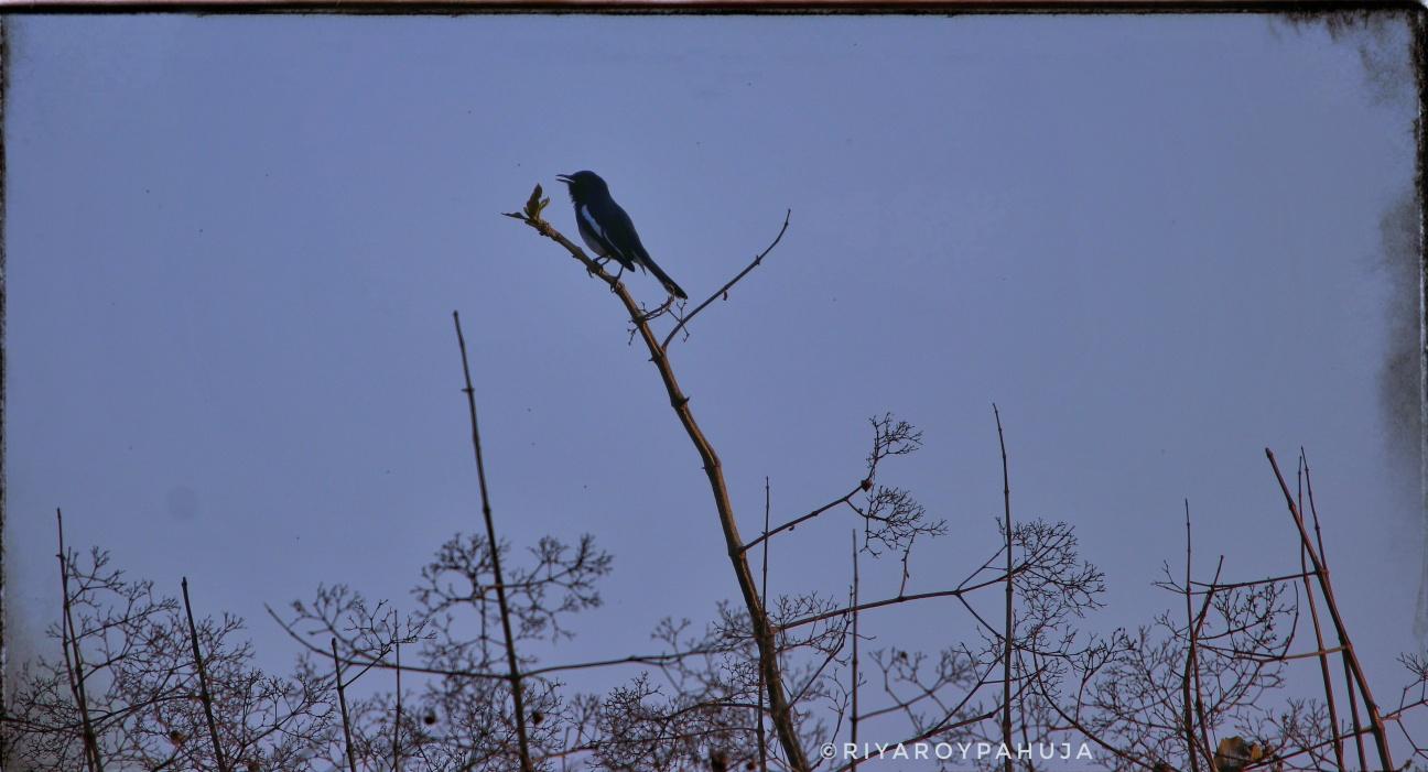 Evening perch.. Exif: f/6.3 exposure:1/1000sec iso:100 @600mm