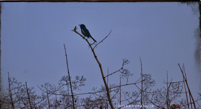Evening perch.. Exif:  f/6.3  exposure:1/1000sec  iso:100  @600mm