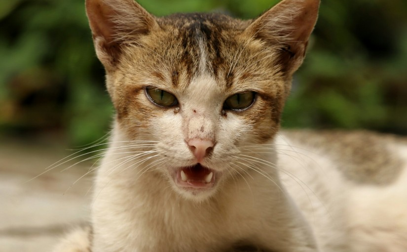 Wild caty