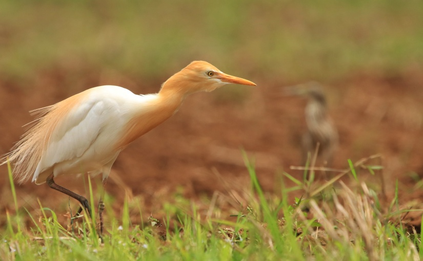 Chopdem birding continues…