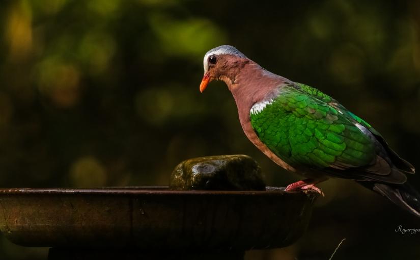 Ganeshgudi~ A birder'sparadise